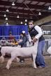 21KKC- Market Lamb Showmanship HS-5663(1).jpg