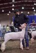 21KKC- Market Lamb Showmanship HS-5667(1).jpg