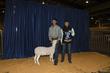 21KKC- Market Sheep BD-4479.jpg