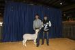 21KKC- Market Sheep BD-4480.jpg