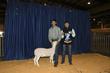 21KKC- Market Sheep BD-4481.jpg