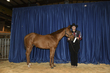 21KKC- Stock Horse Backdrops-5636.jpg