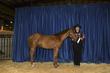 21KKC- Stock Horse Backdrops-5638.jpg