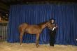 21KKC- Stock Horse Backdrops-5639.jpg