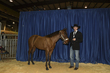 21KKC- Stock Horse Backdrops-5640(1).jpg