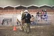21KKC- Stock Horse HS-3566.jpg