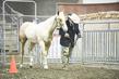 21KKC- Stock Horse HS-3571(1).jpg