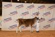 21KenCo-CattleBD-1355.jpg