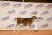 21KenCo-CattleBD-1356.jpg
