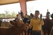 21KenCo-CattleHS-0367.jpg