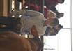 21KenCo-CattleHS-9546(1).jpg