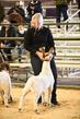 21KenCo-GoatShowmanship-9358.jpg