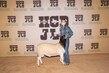 21Kerr-Breeding SheepBD-8733.jpg