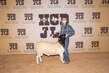 21Kerr-Breeding SheepBD-8734.jpg