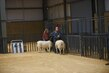 21Kerr-Breeding SheepHS-3802.jpg