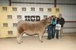 21Kerr-CattleBD-6441.jpg