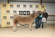 21Kerr-CattleBD-6442.jpg