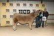 21Kerr-CattleBD-6443.jpg