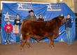 21LC-CattleBD-8943.jpg