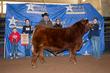 21LC-CattleBD-8945.jpg