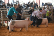 21LeeCo-SwineDrive-3668.jpg