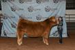 21NC-CattleBD-0256.jpg