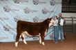 21NC-CattleBD-0260.jpg
