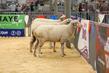 21SA-Sheep-GoatSkillathon-1604.jpg