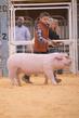 21SC-SwineDriveHS-3110(1).jpg