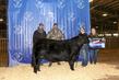 21TC- Cattle BD-2956.jpg