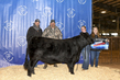 21TC- Cattle BD-2957.jpg