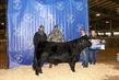 21TC- Cattle BD-2959.jpg