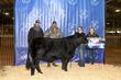 21TC- Cattle BD-2960.jpg