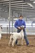 21TC- Market Goat CD-HS-7342.jpg