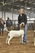 21TC- Market Goat CD-HS-7345.jpg