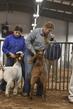 21TC- Market Goat HW-HS-7225.jpg