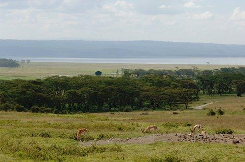 LAKE NUKURU KENYA  10-8-07_049.jpg