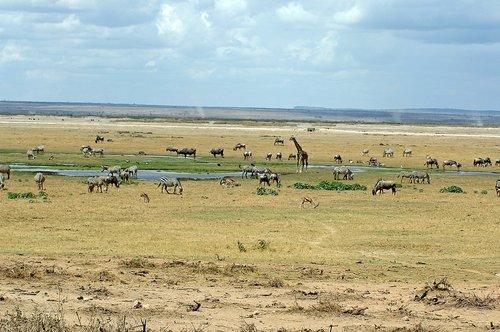 Multiple species gathered at a water hole - Amboseli NP Kenya 10-10-07 2_007.jpg