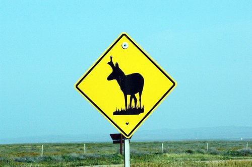Pronghorn Antelope crossing sign - Carrizo Plain CA 4-18-10_115.jpg