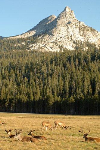 Unicorn Peak and Blacktailed Deer - Yosemite NP 7-04-07_290.jpg