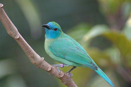 Unidentified Bird SAN DIEGO TRIP 5-06_023.jpg