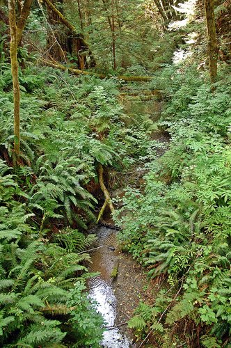 Unnamed tributary to Redwood Creek - Redwood NP CA 1 9-10-09_162.jpg
