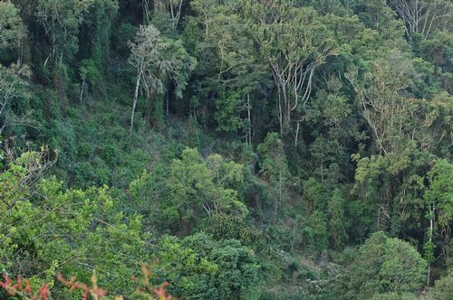 Jungle on the slope of Ngorongoro Crater Tanzania D2X 213 11-19-14E.jpg