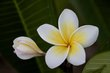 Egg Flower.jpg