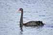 Black Swan (03).jpg