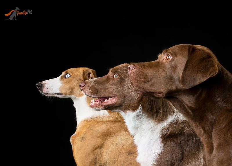 3 dogs side.jpg