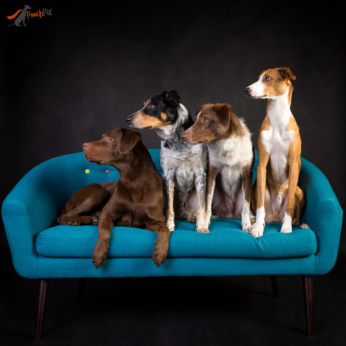 4 doggys looking -20.jpg