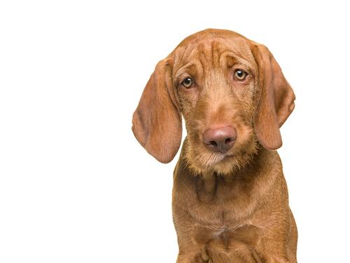doggy ad mango.jpg