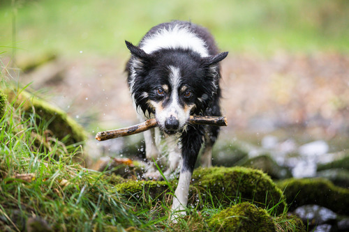 Ollie and his stick.jpg
