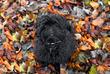 wm Falinge chewy leaves-2ffa9.jpg